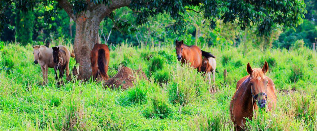 Horses at Haciendas De Naga
