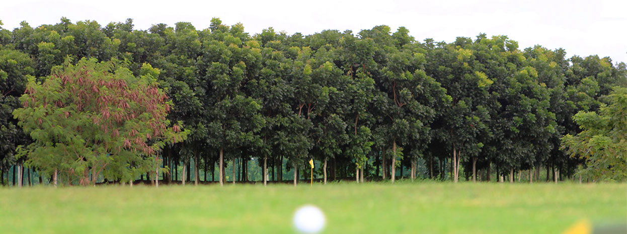 trop[ial golf course naga city